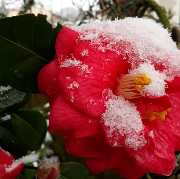 20 tahun barusan ketemu salju lagi saat jalan ke Perancis.
