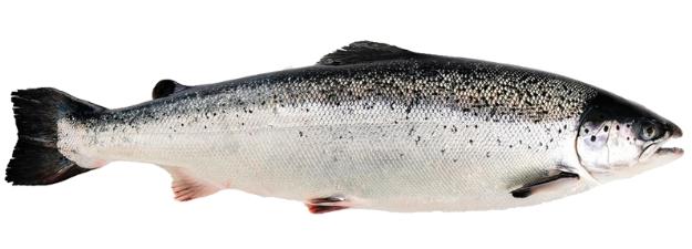 Ikan salmon: bukan hanya sayur atau buah jadi superfood