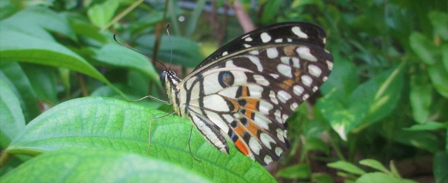 kupu di Changi airport Singapura